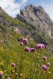 Blumenwiese.