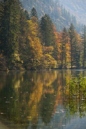 Herbst am Almsee in Oberösterreich, wo sich das buntgefärbte Laub des Mischwaldes malerisch im klaren Seewasser spiegelt. Foto: rubra