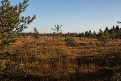 Das Bild zeigt einen Teil des herbstlichen Ibmer Moor im Innviertel. Foto: rubra