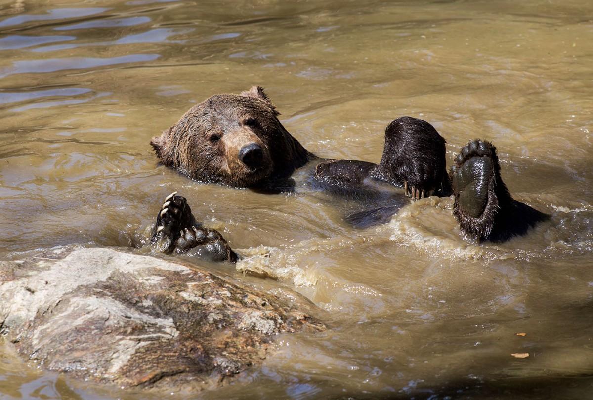 Die Bären im Nationalpark BayrischerWald