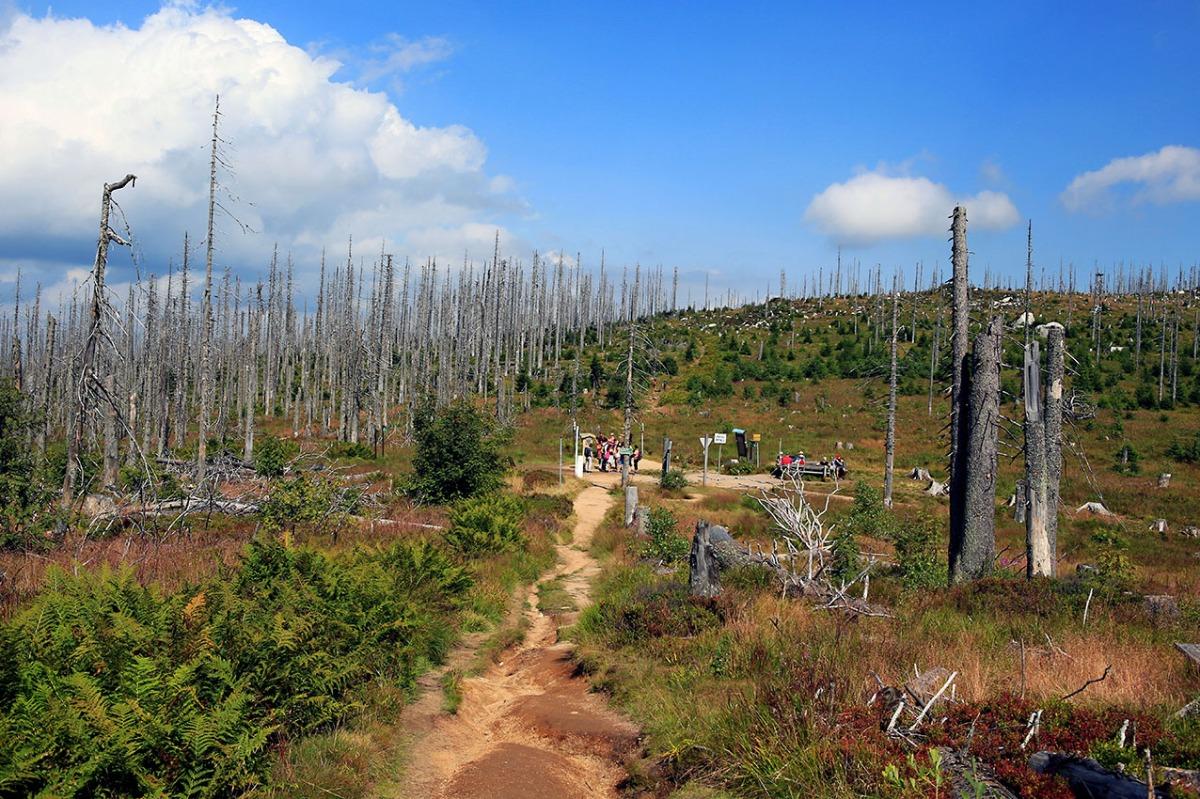 Fotospot Nationalpark Sumava – derBöhmerwald